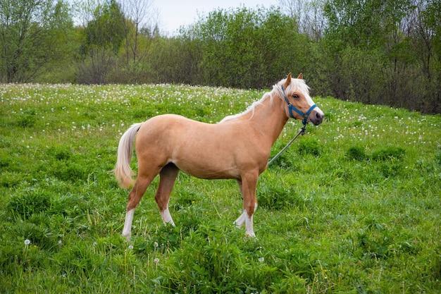 Beau cheval brun mangeant de l'herbe sur les terres agricoles.