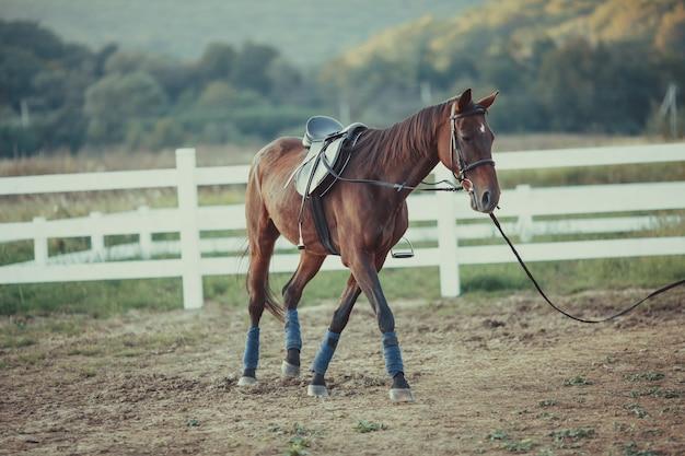 Un beau cheval brun se promène autour de la ferme