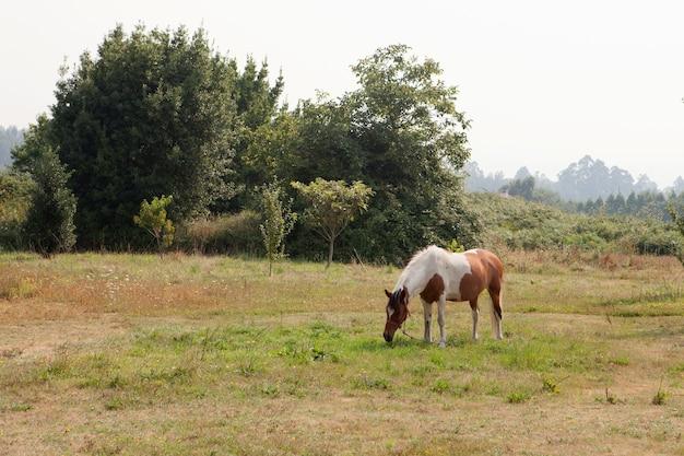 Beau cheval gratuit dans les pâturages