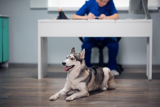 Un beau chien allongé sur le sol dans une clinique vétérinaire, tandis que le médecin vétérinaire prend des notes.