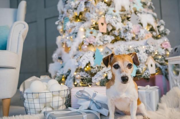 Beau chien en attente de cadeaux