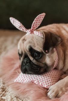 Beau chien carlin mignon gras blanc avec des plaisanteries sur la tête gros plan allongé sur un oreiller de lit de chien rose doux en studio