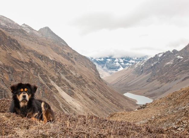 Beau chien de montagne de l'himalaya assis au bord d'une falaise au bhoutan