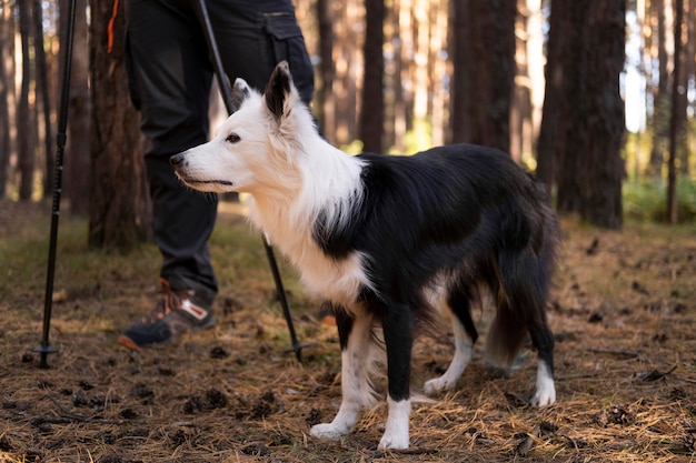 Beau chien noir et blanc dans les bois