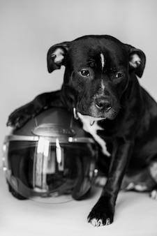 Beau chien noir en casque de moto