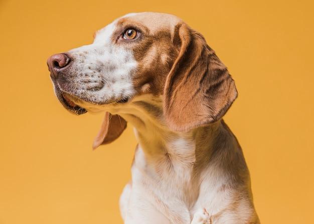 Beau chien pensant regarder ailleurs