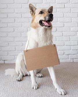 Beau chien portant une bannière en carton