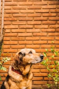 Beau chien posant dans le jardin