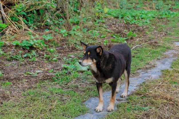 Un beau chien qui court dans l'herbe verte