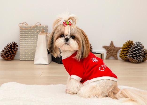 Un beau chien shih tzu portant un pull de noël rouge