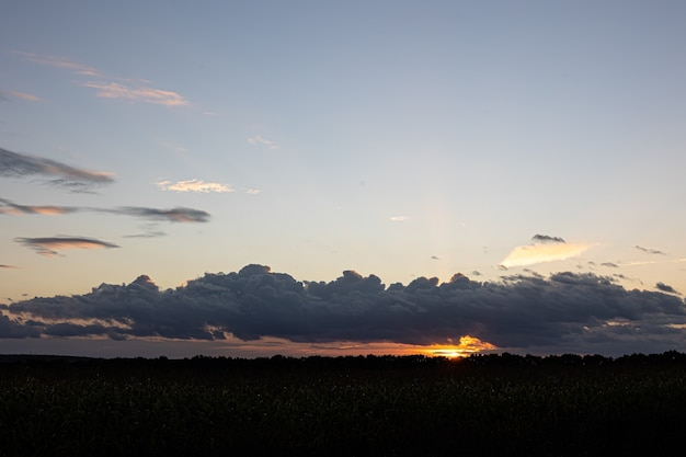 Beau ciel au coucher du soleil sur le champ de maïs