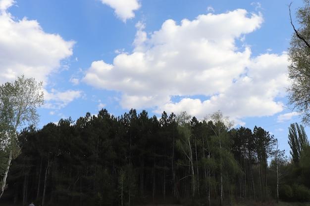 Beau ciel bleu avec des nuages blancs duveteux par une journée ensoleillée au-dessus de la forêt
