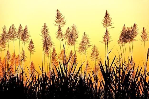 Beau ciel derrière l'herbe tropicale