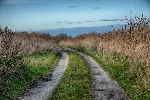 Beau cliché d'un chemin au milieu d'un champ à la campagne