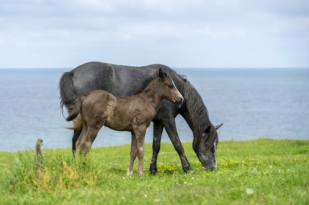 Beau cliché d'un cheval sauvage avec son poulain