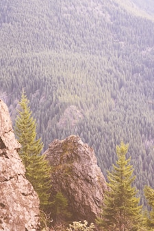 Beau cliché de hautes montagnes rocheuses et d'une forêt