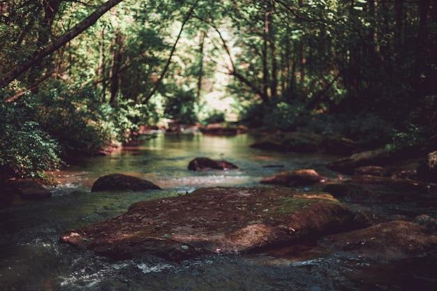 Beau cliché d'une petite rivière dans une forêt