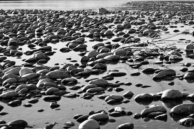 Beau cliché de rochers et d'un arbre cassé dans l'eau en noir et blanc