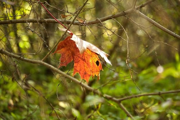 Beau et coloré paysage d'automne