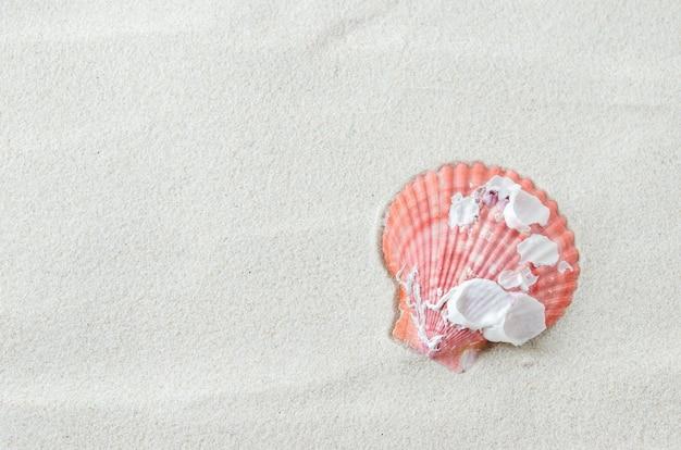 Beau coquillage sur fond de sable blanc