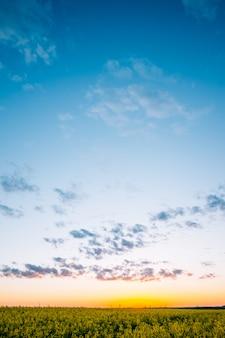 Beau coucher de soleil sur le champ de canola