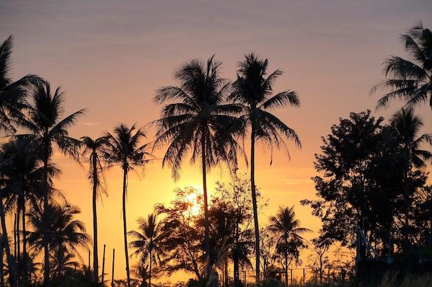 Beau coucher de soleil et champ, couleur du ciel orange.