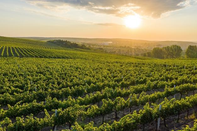 Beau coucher de soleil sur les collines verdoyantes avec des vignes cultivées cricova moldova