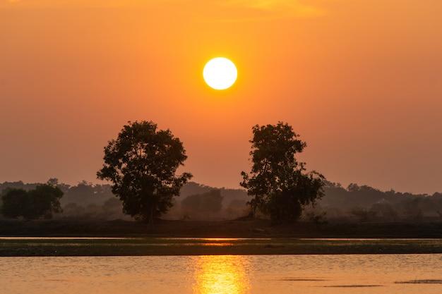 Beau coucher de soleil sur le lac et la silhouette de deux arbres