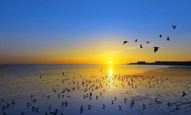 Beau coucher de soleil et les oiseaux qui volent sur la surface de la mer