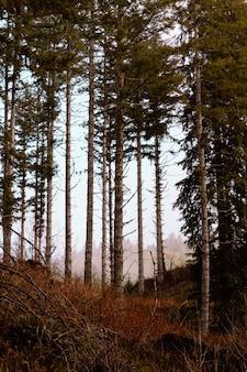 Beau coup d'arbres verts dans la forêt