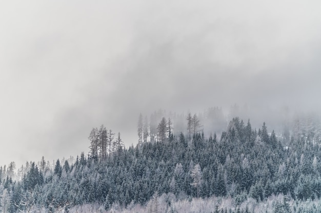 Beau coup d'une colline enneigée avec des plantes et des arbres pendant un temps brumeux