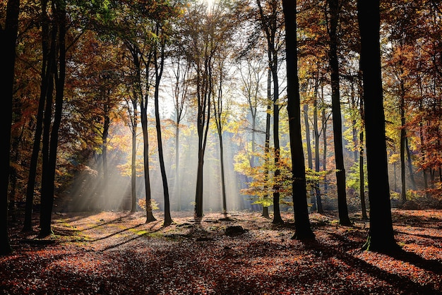 Beau coup de forêt avec des arbres à feuilles jaunes et vertes avec le soleil qui brille à travers les branches