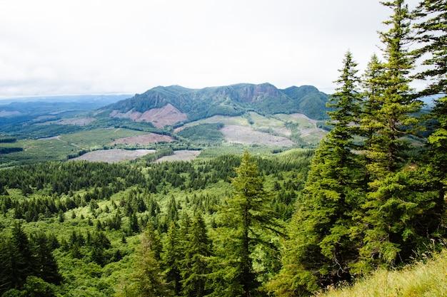 Beau coup de forêt avec des montagnes au loin et un ciel nuageux