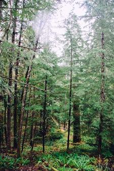 Beau coup d'une forêt