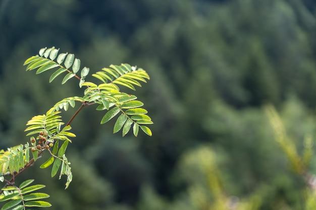 Beau coup de mise au point sélective d'une plante gree