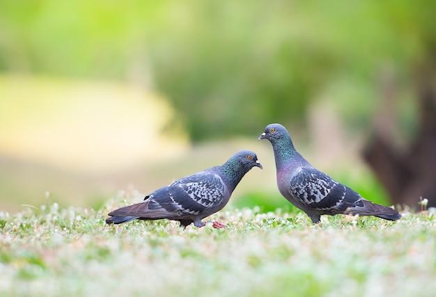 Beau couple oiseau dans le parc naturel