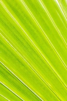 Beau détail de la feuille de palmier