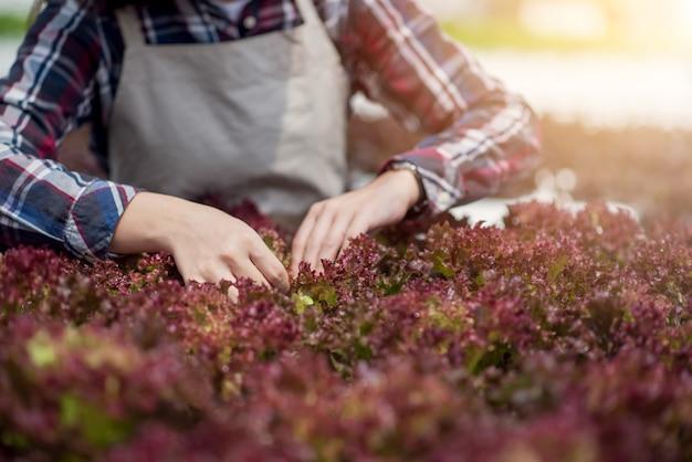 Beau fermier asiatique étudiant la culture et l'analyse de légumes hydroponiques
