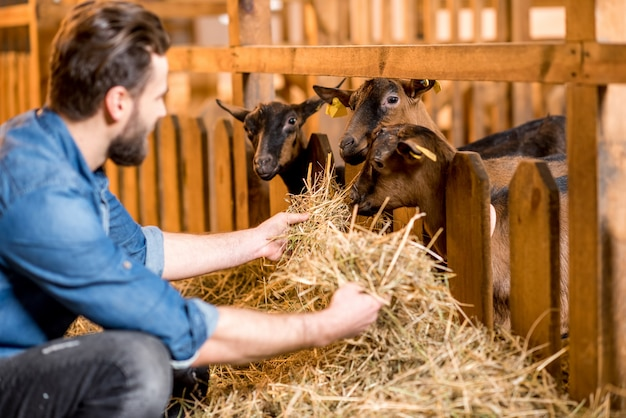 Beau fermier en vêtements de travail nourrissant des chèvres avec du foin dans la grange