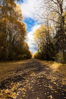 Beau feuillage naturel qui a changé de couleur à l'automne, les feuilles tombent sur la route