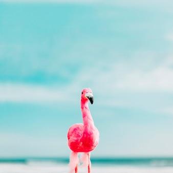 Beau flamant rose en été