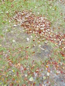Beau fond d'automne de feuilles jaunes et or tombées sur l'herbe verte, début d'automne, cadre vertical
