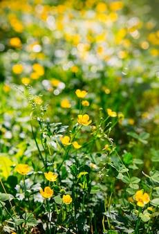 Beau fond d'écran naturel de tir botanique