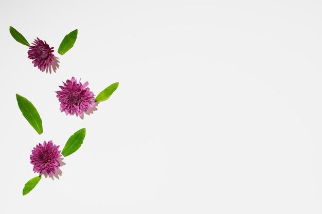 Beau fond fait de boutons de fleurs lumineuses à plat