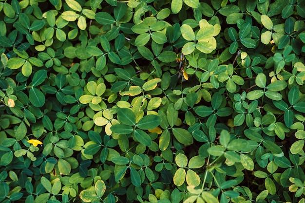Beau fond de feuilles tropicales vertes