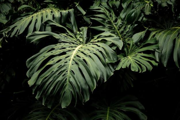 Beau fond de feuilles tropicales