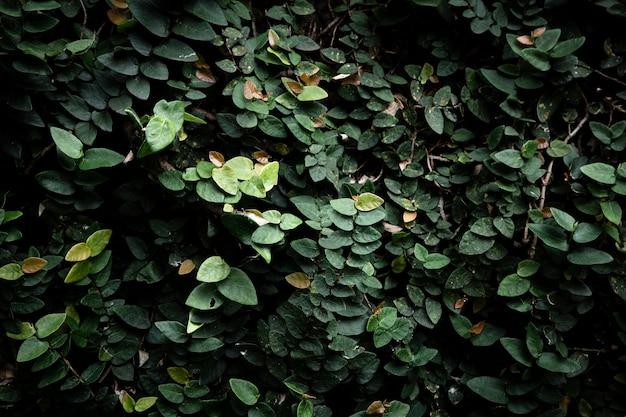 Beau fond de feuilles