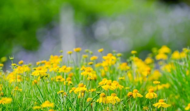 Beau fond de fleur