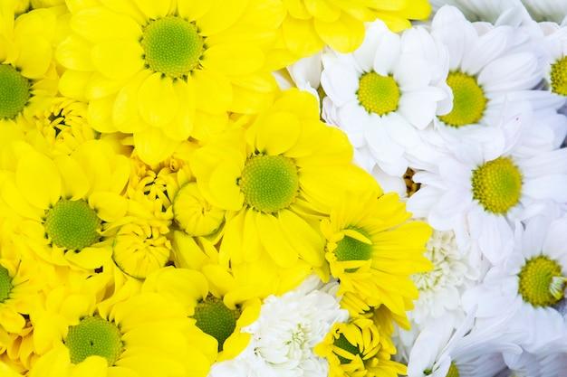 Beau fond de fleurs de chrysanthèmes jaunes et roses