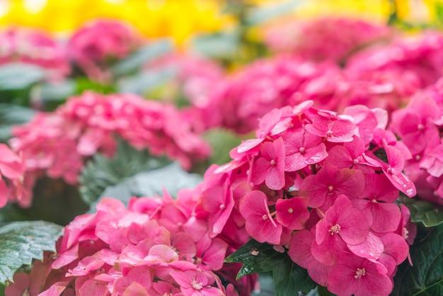 Beau fond de fleurs